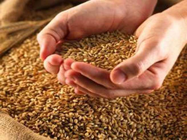 Accel Partners: Agro products need new-age distribution models