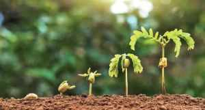 Karnataka Forest Dept Puts 6 Of Its Nurseries Online