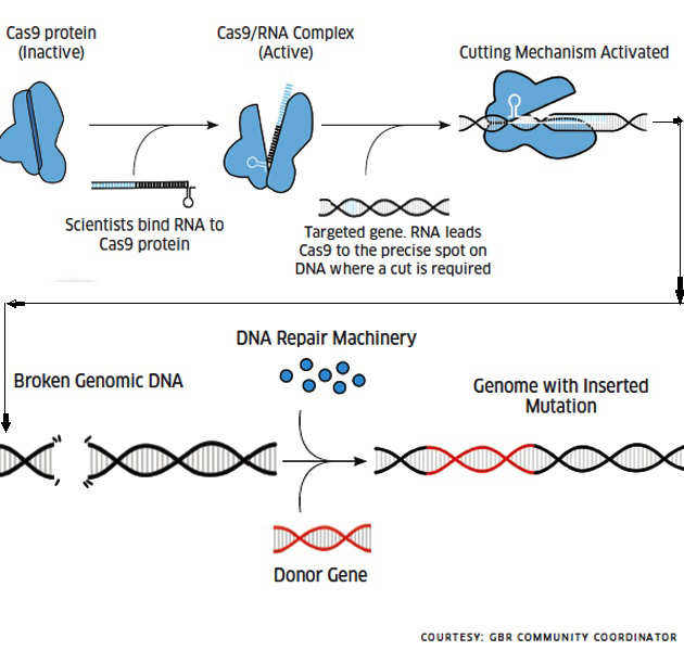 A look at gene editing and why it is controversial