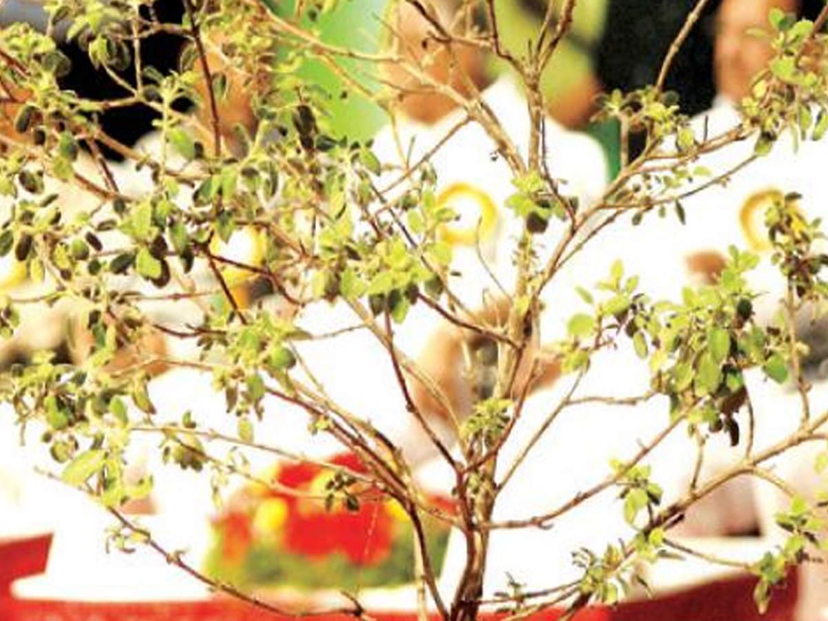 herbal med: DRDO scientist develops herbal drug to treat