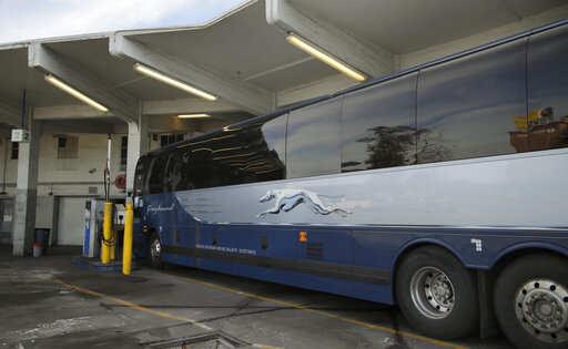 Public Transport System Brazil S Ground Transportation Watchdog Suspends International Bus Rides For 60 Days Auto News Et Auto