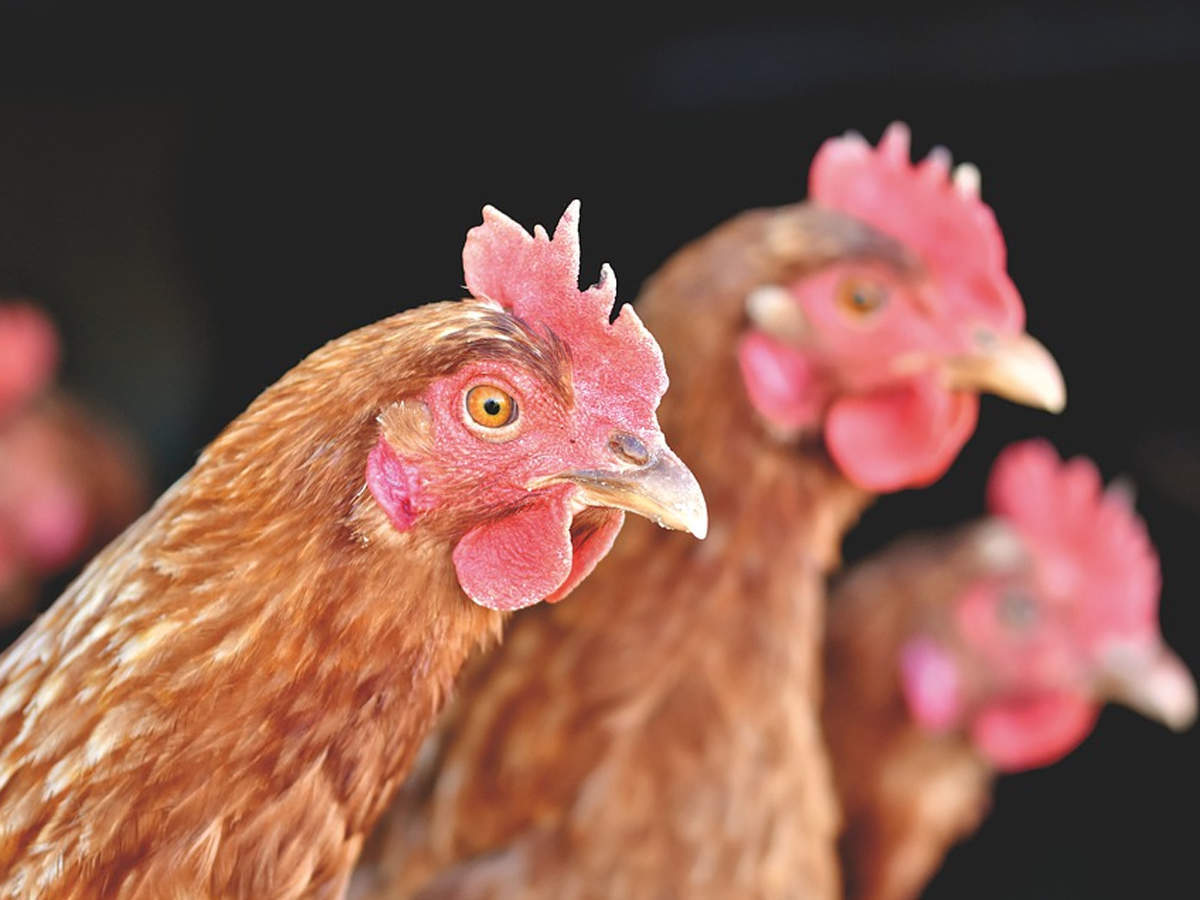 China's Shenzhen says chicken imported from Brazil tests positive ...