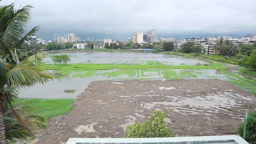 Maharashtra: Cidco does not recognize five city wetlands at Seawoods, Uran – ET RealEstate