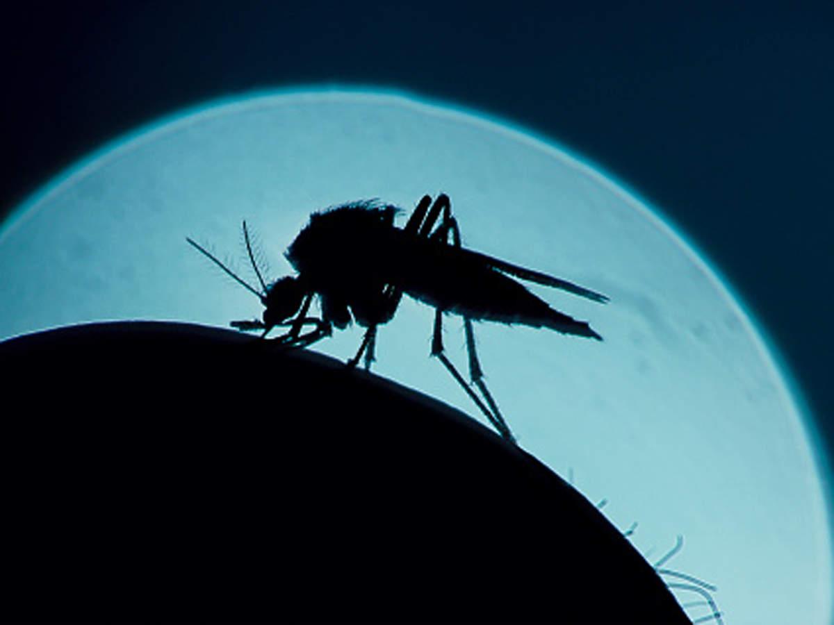 IMD شروع انتشار پیش بینی ها برای شیوع مالاریا در ماسون بعدی: رسمی
