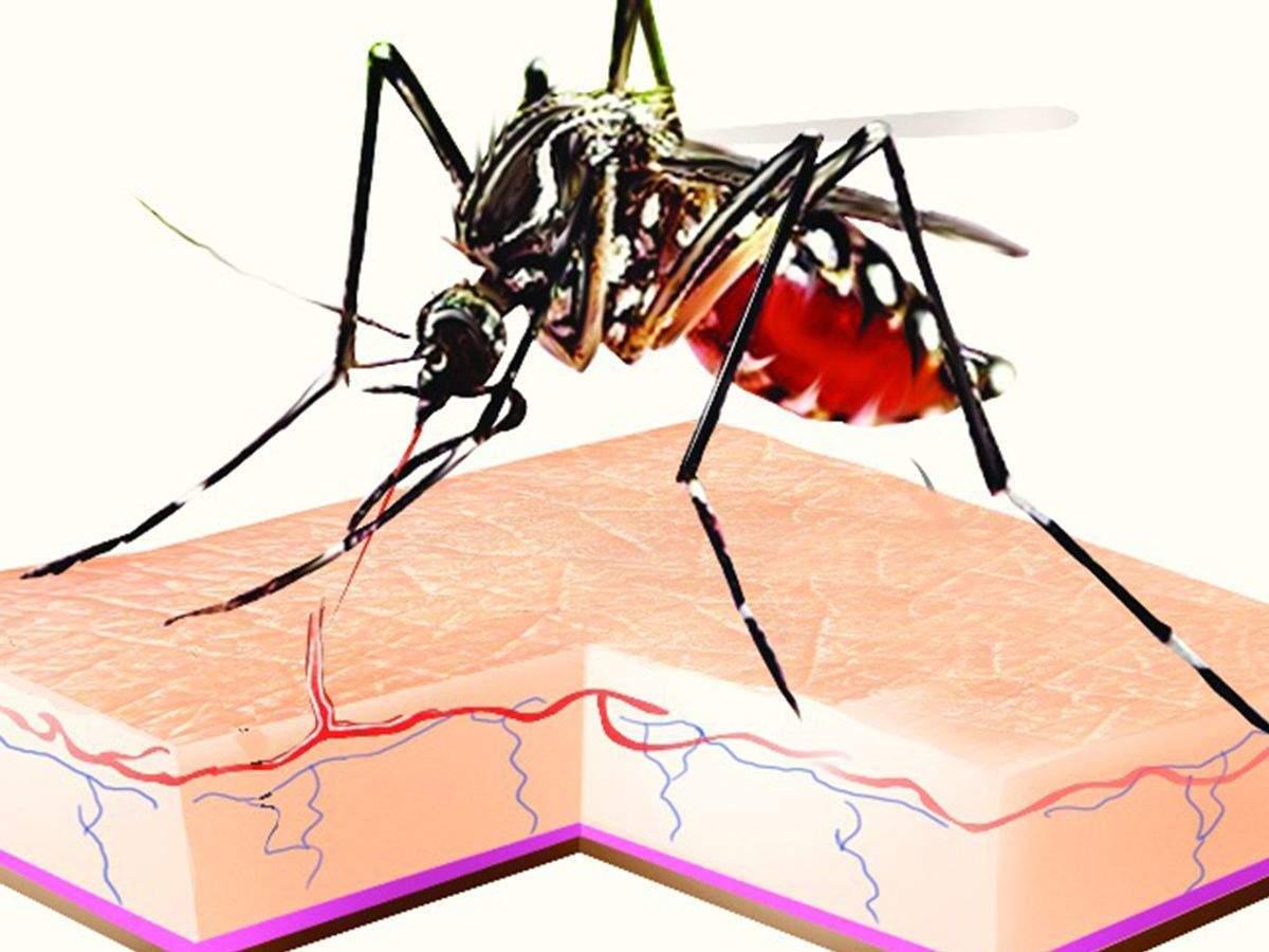 Chikungunya, dengue cases up, but fewer than last year in Mumbai