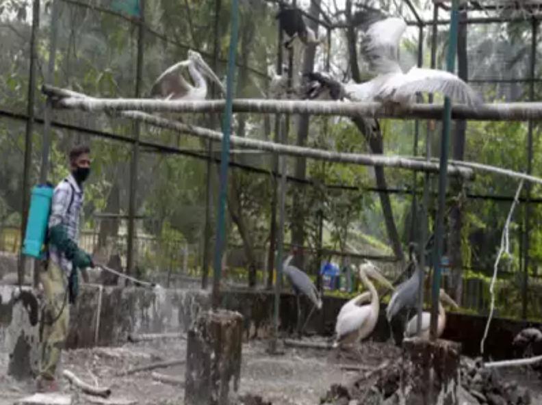 شیوع آنفلوانزای مرغی در هیماچال ، کرالا ، راج