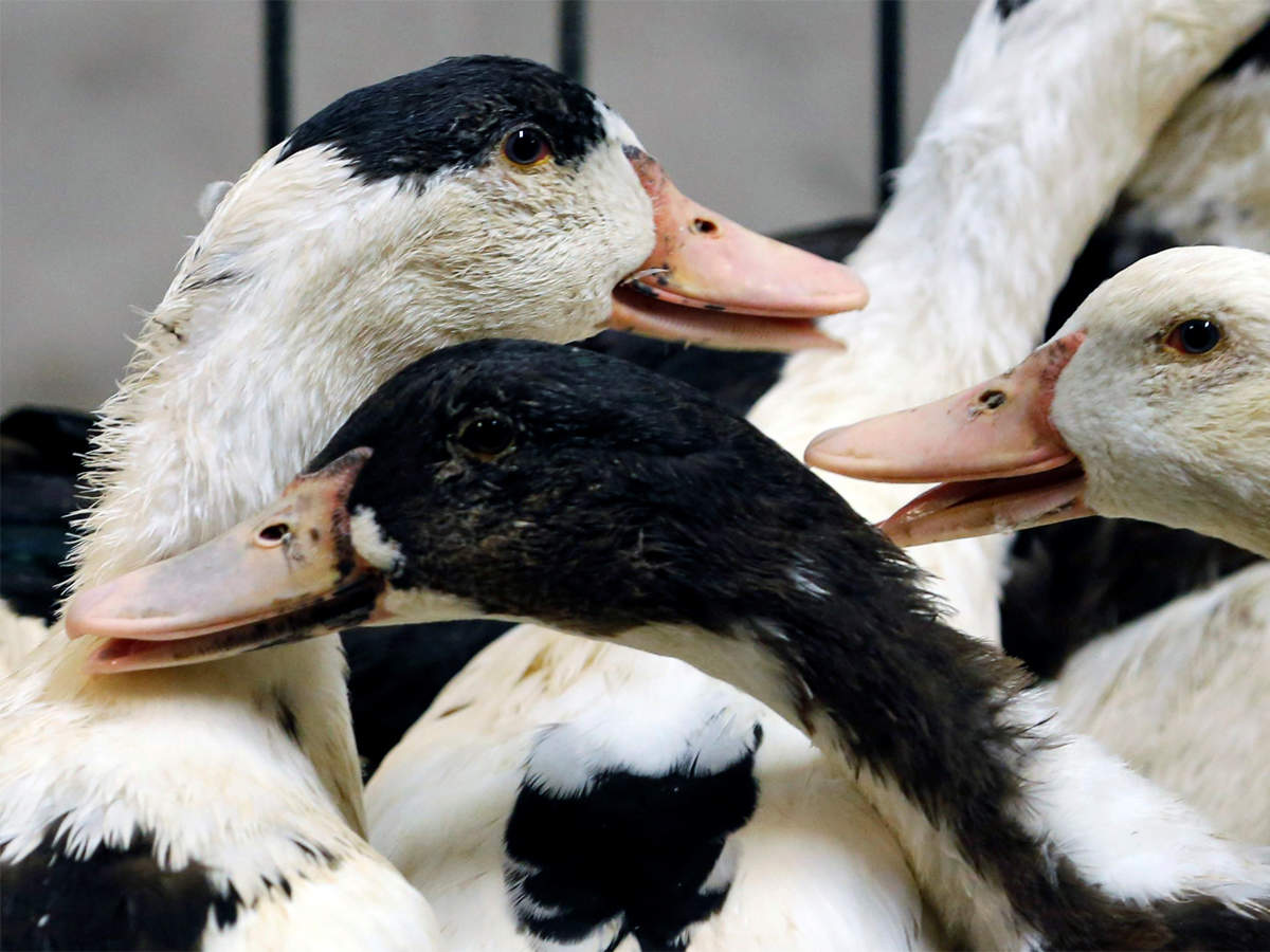 There's no evidence of bird flu infecting humans: Sanjeev Balyan