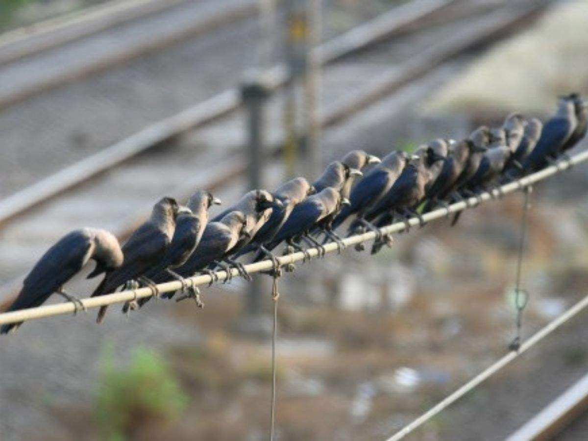 Reports of over 50 bird deaths received by Delhi govt, samples sent for testing