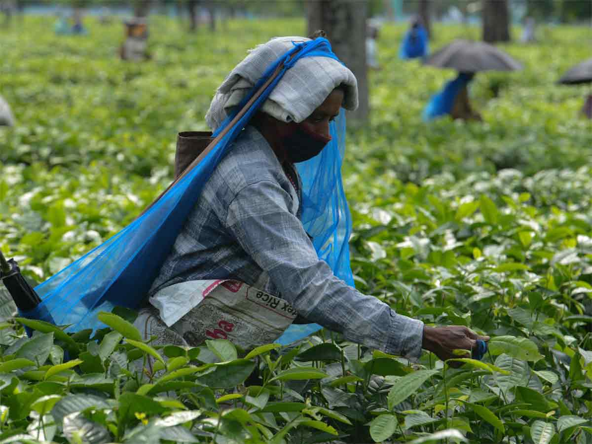 West Bengal CM allots over 4,600 houses to tea garden' workers – ET RealEstate