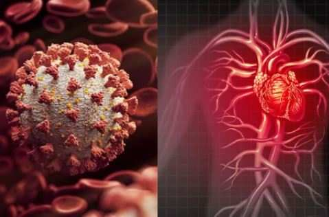 'How coronavirus infection interferes with heart function decoded'
