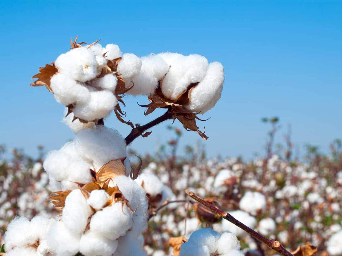How Investors Can Profit From Cotton Futures