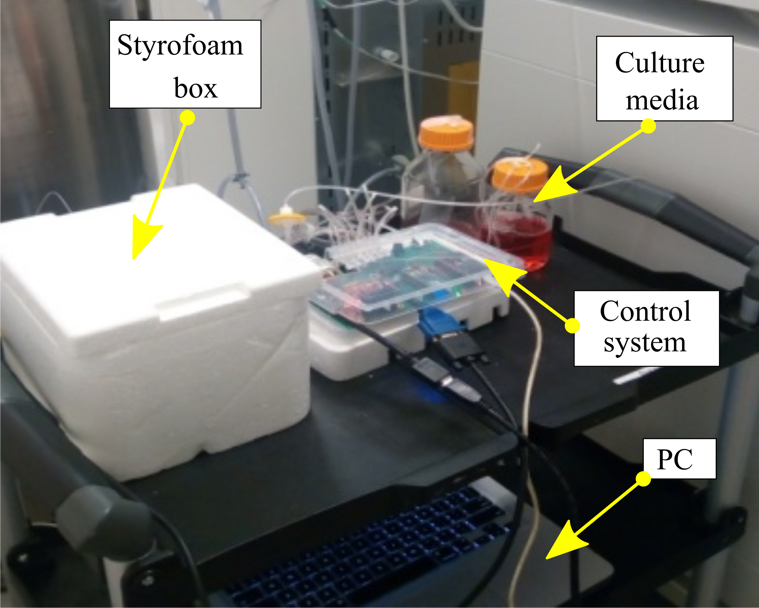 IIT Madras & MIT Scientists grow Human Brain Tissues from a 3D Printed Bioreactor