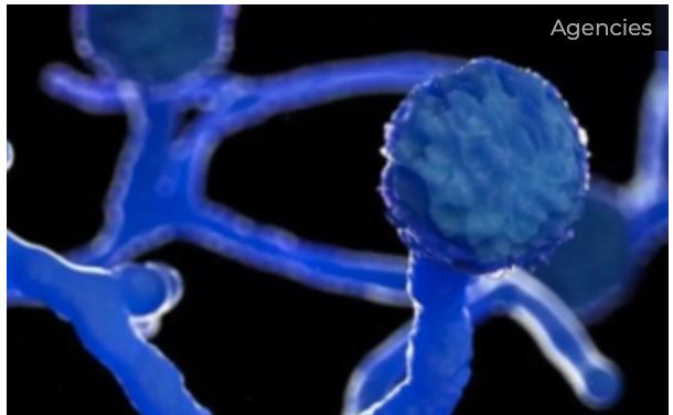 Govt urges states to make black fungus notifiable disease under Epidemic Diseases Act