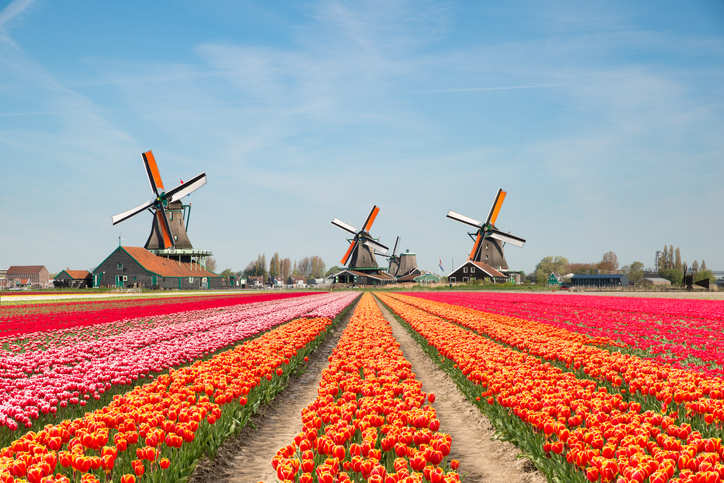 Netherlands updates travel requirements for Indians; fully-vaccinated travellers can apply for any visa