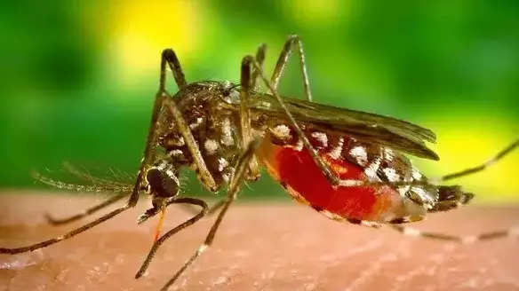 Ahmedabad sees 243% rise in dengue cases in January-September this year