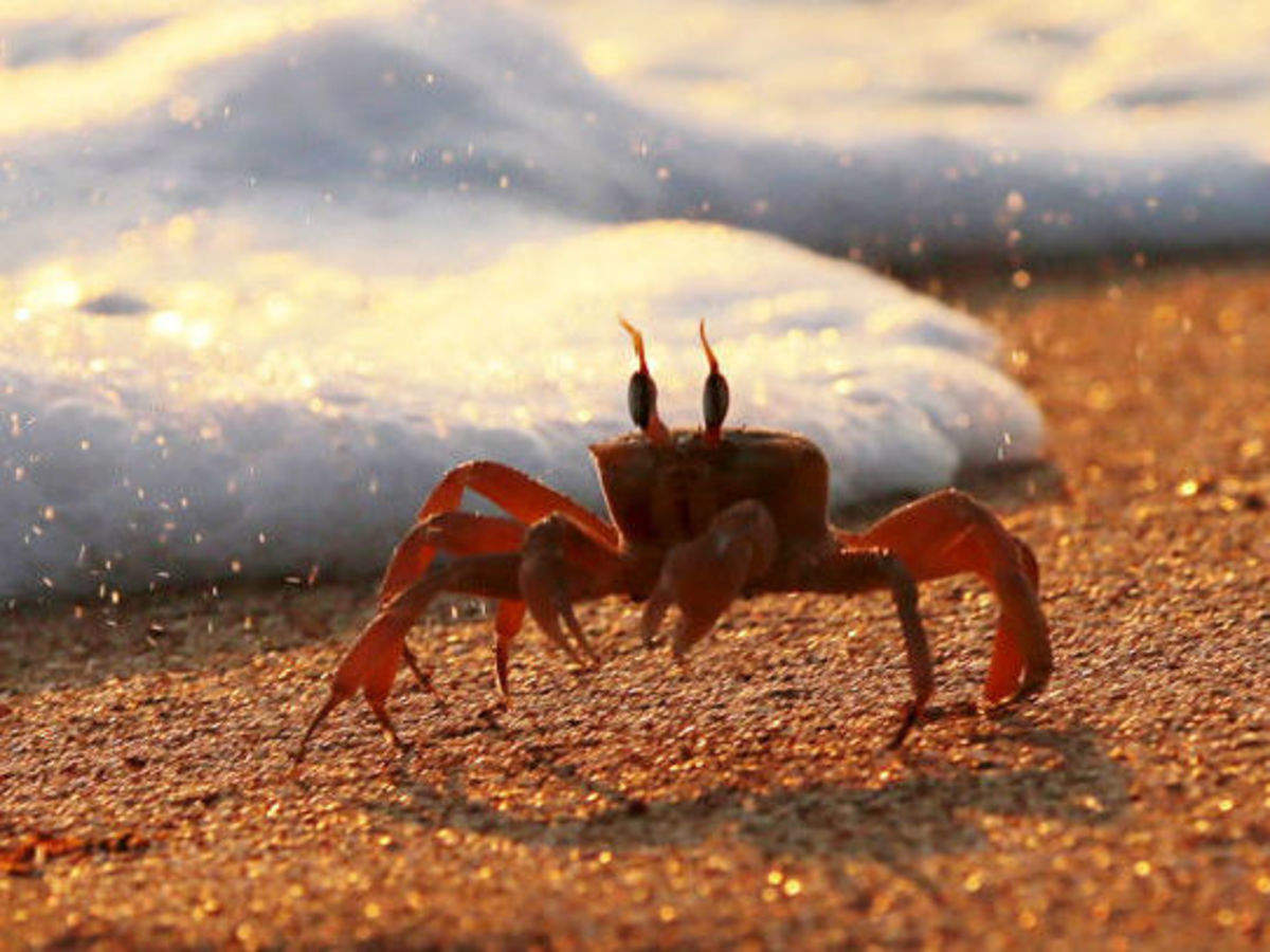 Seafood companies see big bucks in mangrove crab exports