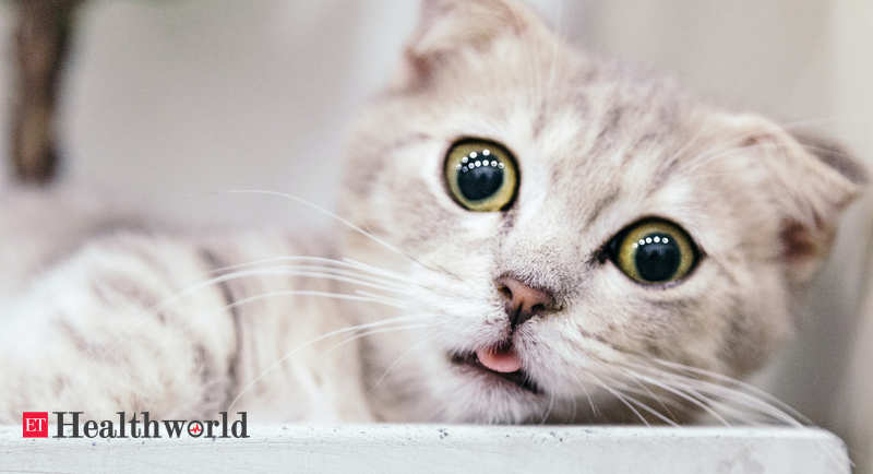 Cats May Be Catching Covid At Far Higher Rates Than Thought Health News Et Healthworld
