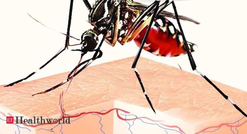 Tap water access linked to dengue risk: Study - ETHealthworld.com